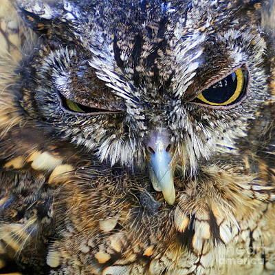 Photograph - Small Owl by Rachel Munoz Striggow