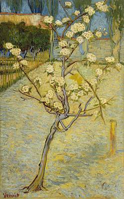 Small Pear Tree In Blossom Art Print by Vincent van Gogh