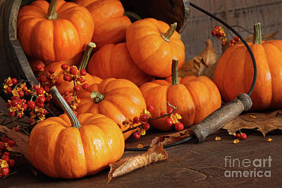 Small Pumpkins With Wood Bucket  Art Print by Sandra Cunningham