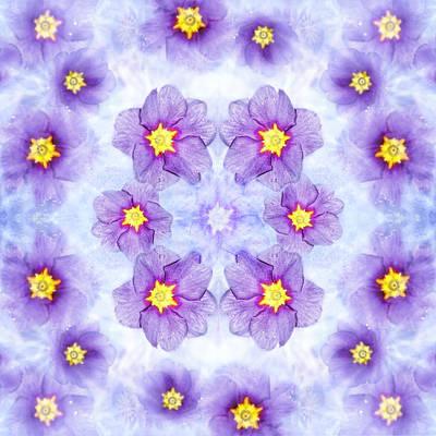 Photograph - Small Purple Flowers - Light by Belinda Greb