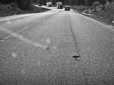 Photograph - Small Road Runner by RicardMN Photography
