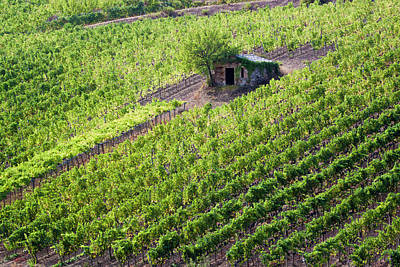 Pastoral Vineyard Photograph - Small Rock Shed In The Vineyards by Terry Eggers