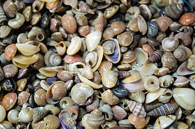 Photograph - Small Sea Shell Collection by Tikvah's Hope