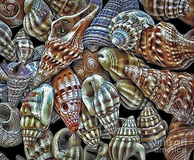 Small Sea Shell Collection Art Print by Walt Foegelle