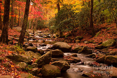 Art Print featuring the photograph Small Stream by Geraldine DeBoer
