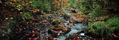 Fallen Leaf Photograph - Small Stream In Fall, Upper Peninsula by Panoramic Images