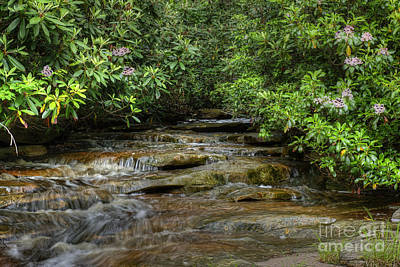 Small Stream In West Virginia With Mountain Laurel Art Print by Dan Friend