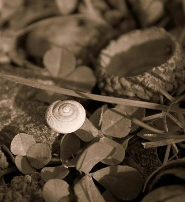 Print featuring the photograph Small Things Matter by Candice Trimble
