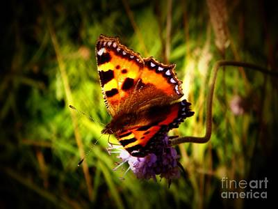 Photograph - Small Tortoiseshell Butterfly by Yvonne Johnstone