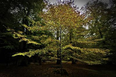 Photograph - Small Tree by Henrik Petersen