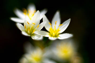 Photograph - Small White Flowers by Darryl Dalton