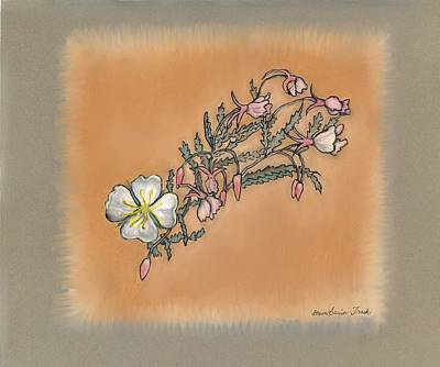 Drawing - Small Wild Primrose by Dawn Senior-Trask