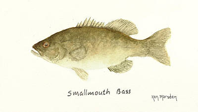 Painting - Smallmouth Bass by Ken Marsden