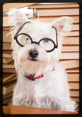 Read Photograph - Smart Doggie by Edward Fielding