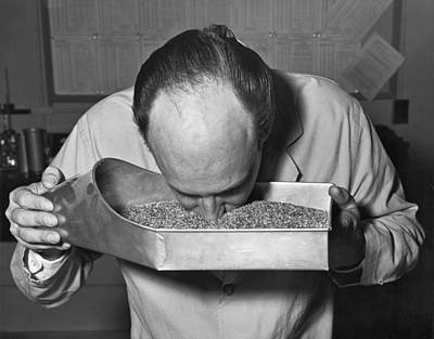Whiteboard Photograph - Smelling Grain Inspector by Underwood Archives
