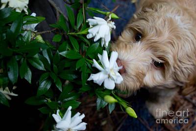 Photograph - Smells So Good by Sandra Clark