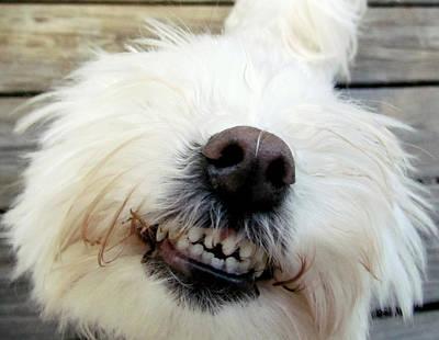 Maltese Photograph - Smile For Me Angel by Lori Pessin Lafargue