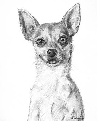 Drawing - Smiling Chihuahua In Charcoal by Kate Sumners