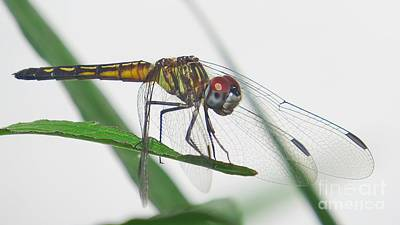 Dragonfly Photograph - Smiling Dragonfly by Scott Cameron