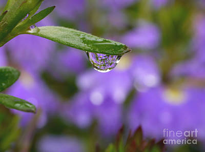 Flowers And Water Drops Wall Art - Photograph - Smiling Drop by Irina Wardas