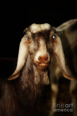 Animal Portraiture Mixed Media - Smiling Egyptian Goat II by Doc Braham