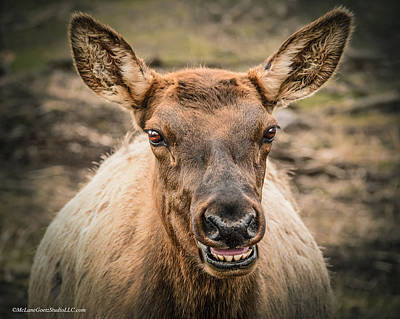 Elk Photograph - Smiling Elk by LeeAnn McLaneGoetz McLaneGoetzStudioLLCcom