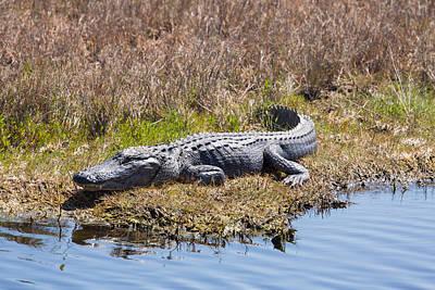 Photograph - Smiling Gator by John M Bailey