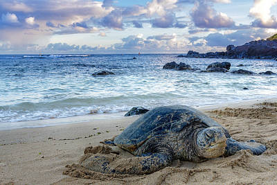 Turtle Photograph - Smiling Hono by Hawaii  Fine Art Photography