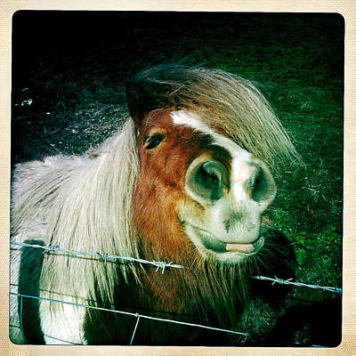 Photograph - Smiling Horse by Steve Ball