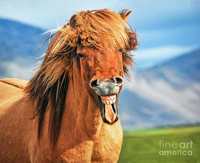 Photograph - Smiling Icelandic Horse by JR Photography