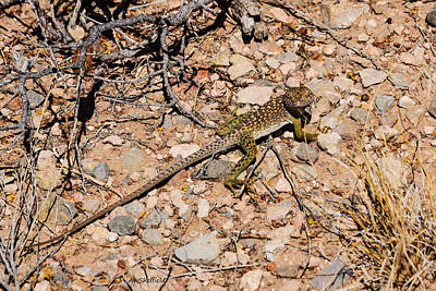 Photograph - Smiling Lizard by Allen Sheffield