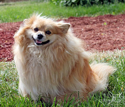 Photograph - Smiling Pom by Debbie Hart