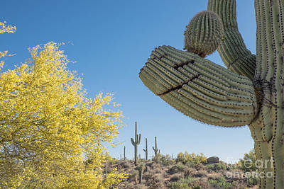 Photograph - Smiling Saguaro Cactus by Marianne Jensen