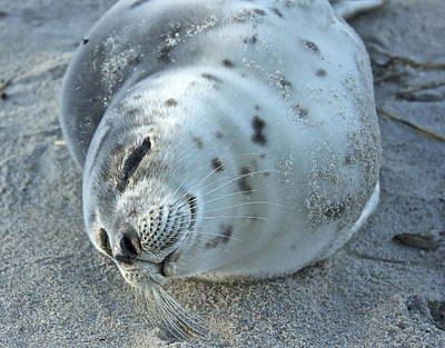 Photograph - Smiling Seal by Amazing Jules