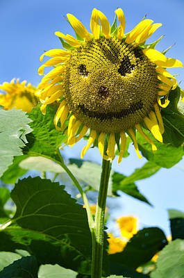 Smiling Sunflower Art Print by Donna Doherty
