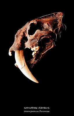Tiger Fractal Photograph - Smilodon Fatalis Skull 2 by Weston Westmoreland