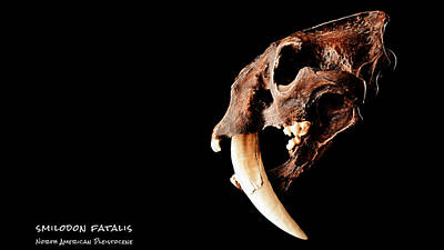 Tiger Fractal Photograph - Smilodon Fatalis Skull 4 by Weston Westmoreland