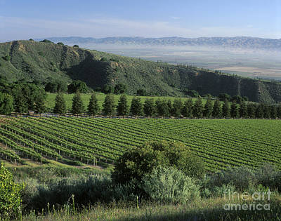 Photograph - Smith And Hook Vineyard by Craig Lovell