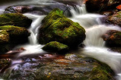 Photograph - Smith Creek Moss And Fern by Greg and Chrystal Mimbs