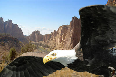 Photograph - Smith Rocks Eagle by Arthur Fix