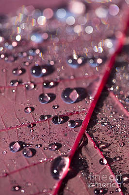 Smoke Bush Droplets Art Print by Anne Gilbert