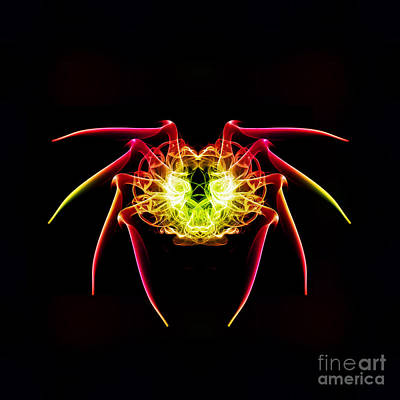 Smoking Trails Photograph - Smoke Spider by Steve Purnell