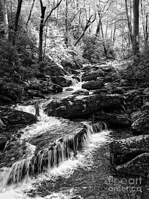 Photograph - Smokey Mountain  Hidden Cascades by Lee Craig