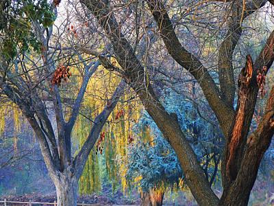 Split Rail Fence Photograph - Smokey Sunset Trees by Pamela Patch