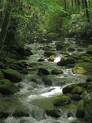 Smoky Mountain Stream Art Print by Rita Mueller