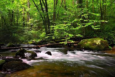 Trout Photograph - Smoky Mountain Waters by Carol R Montoya