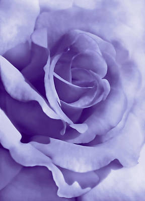 Photograph - Smoky Purple Rose Flower by Jennie Marie Schell