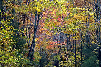 Photograph - Smoky Woods by Jim Dollar
