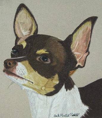 Drawing - Smooth Coated Chihuahua by Anita Putman