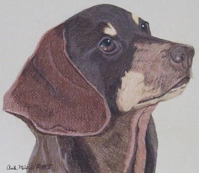 Drawing - Smooth Dachshund by Anita Putman